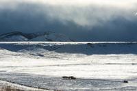snow, vista, horses